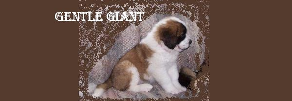 Gentle Giant: The Saint Bernard Fanlistings
